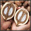 Babassu - principi attivi AKIKO-YO per la cura della pelle
