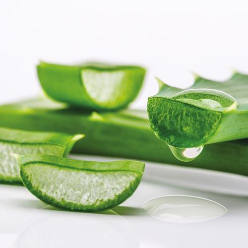 Aloe vera - principi attivi AKIKO-YO per la cura della pelle del viso