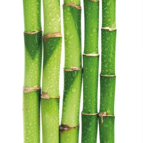 Bambù - principi attivi AKIKO-YO per la cura della pelle del viso