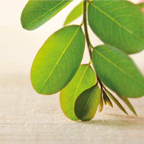 Moringa - principi attivi AKIKO-YO per la cura della pelle del viso